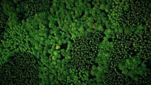 Dreiteiler über die Geheimnisse des Waldes @ ZDF Terra X